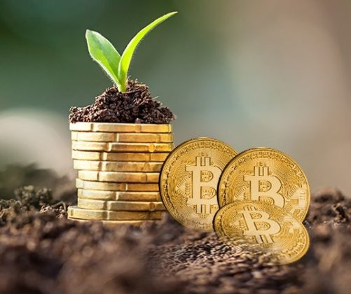 plant growth using bitcoin coin pot